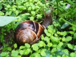 The Snail by xpoweruser