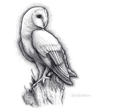 Inktober '15, Day 2, Barn Owl by ofcowardiceandkings