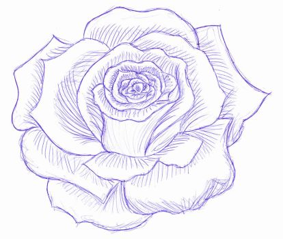 rose- pen art II by Jay-JayB