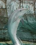Dolphin Play Time by blsphotography