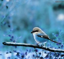 Twitter by faisalh