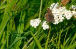 butterfly 2 by Paddy84