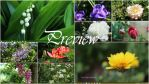 The beauty of flowers Theme Windows 8,8.1,10 by Andrei-Azanfirei