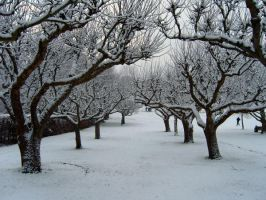 Apple trees rows by Kaytoo-dreamer