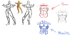 Male Anatomy Study by TheChabot