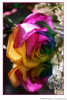 Happy Roses 10 by MarjoleinART-Photos