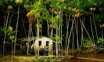 Life at the Amazon 2 by IsacGoulart