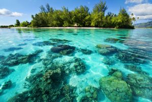 Underwater coral reef next to tropical island by MICHAELSTEELE