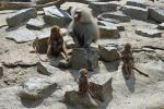 Baboon family by M-art-ique