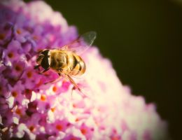 Bee at work by tsxworld