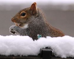 Snacking in the snow by FlukieW