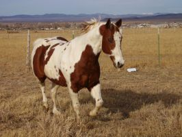Horses 144 .:Stock:. by WesternStock