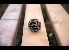 lonely pine cone by Ohbradley