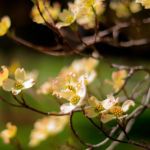 Spring Blossoms by chef-chad