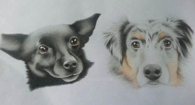 Two dogs by AlinaEvelin
