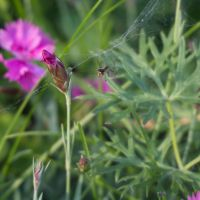 blurry spider by ltiana355