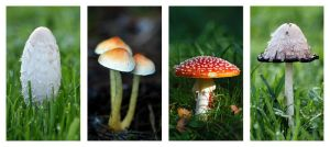 Toadstools by Natalieb78