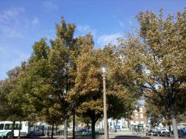 Autumn leaves to reveal by Mythhunter