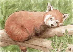 Red Panda ACEO by haz-elf