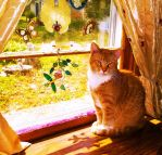 Peachy Keeno in the kitty window by MystMoonstruck