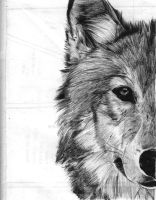 Wolf Ballpoint by Shanilyn