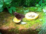 Butterfly from PEI Butterfly House by donnatello129