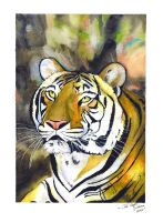 Tiger Watercolor Painting by Jc2theW