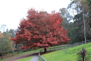 Big Red Tree Stock by CNStock