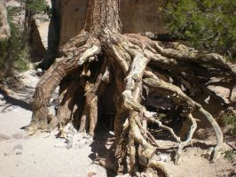 Gnarled Roots by DrachenVarg-stock