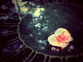 a.rosy.reflection by sarah-marley