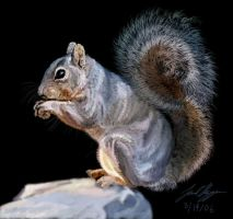 Squirrel by dr-schreaber