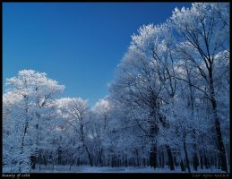 Beauty of cold by Zair-Ugru-nad