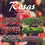 | Rosas Pack | Fatty.- by fattyBear
