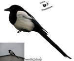Cut-out stock PNG 44 - sweet magpie by Momotte2stocks