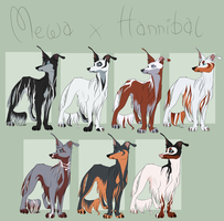 Mewa x Hannibal litter [CLOSED] by blackunia