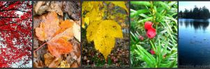 The Colors of Fall by Mwellie