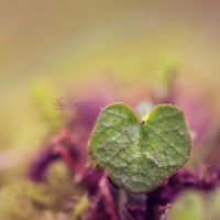 7/52 - Natures Love by IndigoSummerr