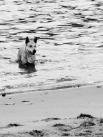 Dog by luiscds
