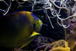 Parrot Fish by chapdeus