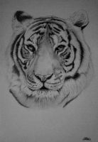 Bengal Tiger by Crisstyana