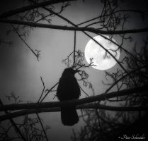 Moonshadow. by Phototubby