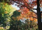 Early Autumn, Chicago Botanical Garden by localreviews