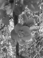 Grayscale Flowers by Fangishot630