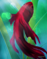 My dearest red Betta splendens (Kampffisch) by Sumi-Ichi