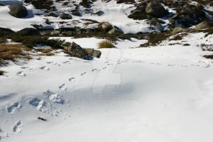 Mt Kosciuszko Footprints in the snow by Colin-LOCP