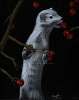 Ermine by be-a-sin