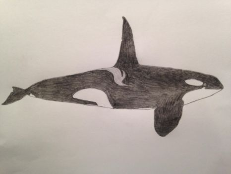 Kaihyo the Killer Whale by TheMysticFrog