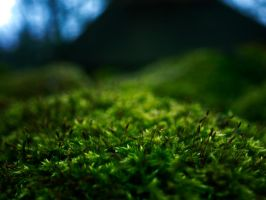 Forest of Moss by Mare-I