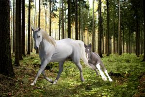 Forest horses by jesuslover488448