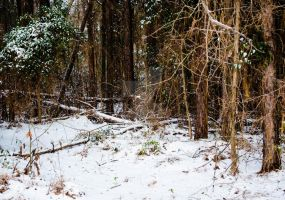 Woodly Winterland by PhotographicCrypto